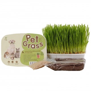 Green Pet 7-Day Organic Pet Grass
