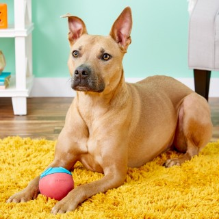 Petstages Challenge Ball Treat Dispensing Dog Toy