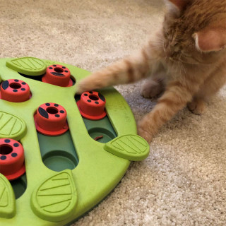 Nina Ottosson Buggin Out Puzzle & Play Cat Toy - Level 2