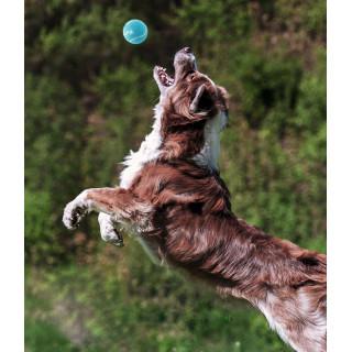 Outward Hound Squeaker Ballz Dog Toy