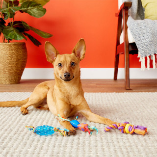 Petstages Mini Chew Starter Pack Dog Chew Toy