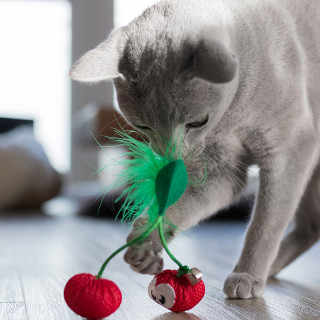 Petstages Dental Cherries Catnip Infused Cat Toy