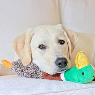 Petstages Headbangerz Duck Dog Toy