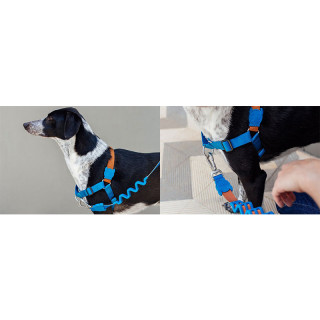 LIMITED EDITION Zee.Dog Delta No-Pull Soft-Walk Dog Harness