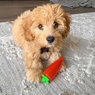 Petstages Crunch Veggies Pepper Medium Dog Toy