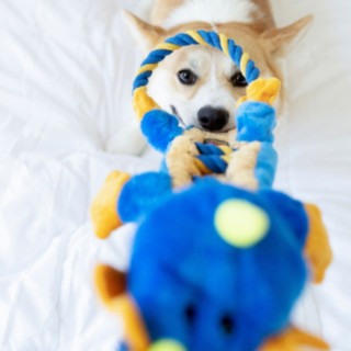 Petstages Ropes-A-Go-Go Dragon Dog Toy
