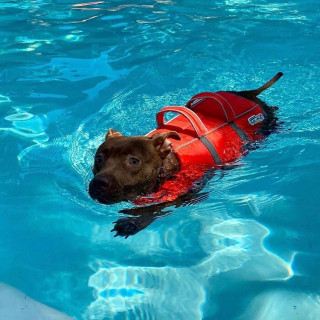 Outward Hound Granby Ripstop Splash Dog Life Jacket