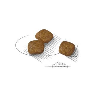 Royal Canin Mini Urinary Care Dog Dry Food