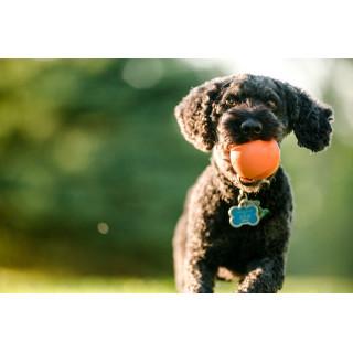 West Paw Jive Dog Toy
