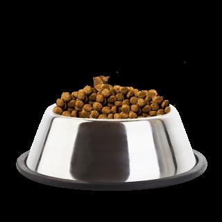 Eukanuba Puppy Large Breed 9kg Dog Dry Food
